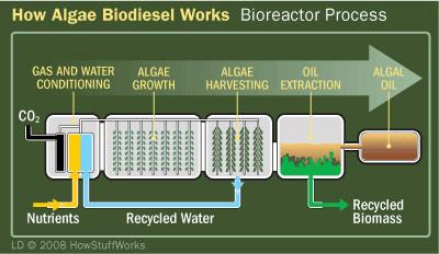 algaebiodiesel