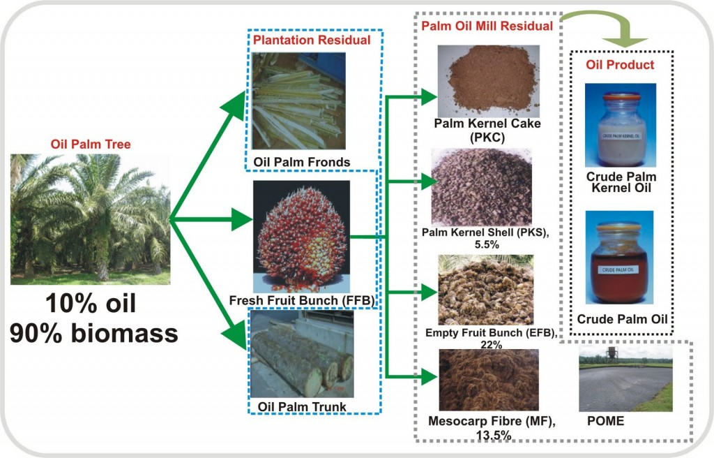 palmbiomasswastes