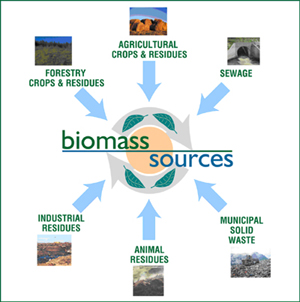 Importance of Biomass Energy