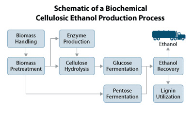 essay on cellulosic ethanol Essays concerning the cellulosic biofuel industry alicia sue rosburg  figure 33 90% confidence interval for net losses per gallon of cellulosic ethanol production .
