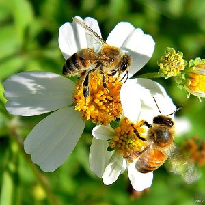 bees-garden