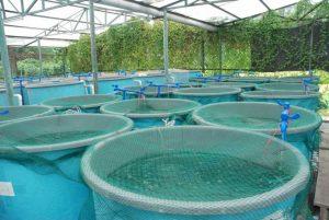 aquaculture-fish-farms