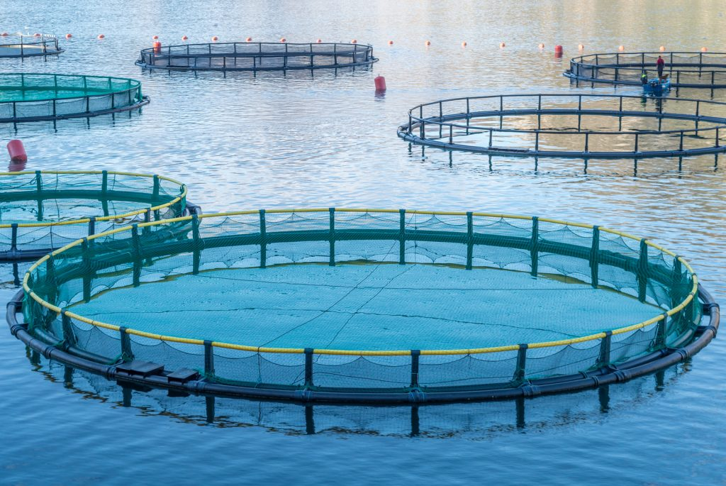 Different types of aquaculture must be used to raise different species of fish.