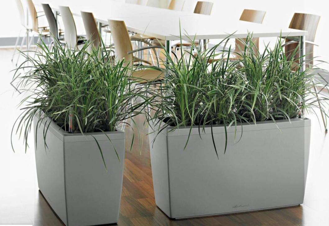 Indoor Self-Watering Planter: Keep Your Indoor Plants Fresh and Healthy |  BioEnergy Consult